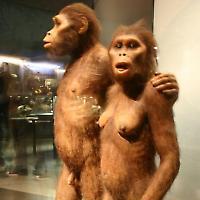 Rekonstruktion des Australopithecus <br/>Foto von Ryan Somma